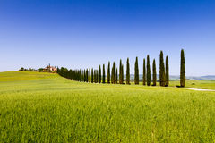 Country road flanked with cypresses in Tuscany, Italy Royalty Free Stock Images