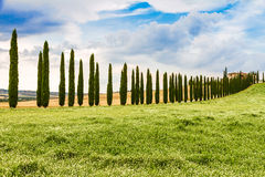 Country road flanked with cypresses in Tuscany, Italy Royalty Free Stock Photo