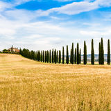 Country road flanked with cypresses in Tuscany, Italy Royalty Free Stock Photography