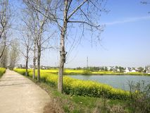 Country Road by Flower Field. A country road goes by a flower field and a lake royalty free stock images