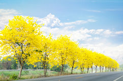 Country road with flowers Royalty Free Stock Image