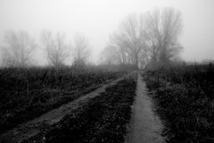 Country road in the fog. A country road in the fog, with some almost invisible plants and trees stock images