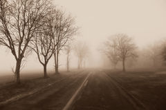 Country Road Fog, Trees. A monochrome photo of a country road in Walworth County, Wisconsin on a foggy, misty morning. The bare trees are fading off into the royalty free stock photography