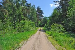 Country road in forest Stock Image
