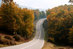 Country road in a forest Royalty Free Stock Image