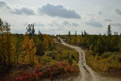 Country road through the forest Royalty Free Stock Photography