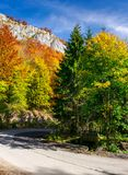 Country road through forest in autumn. High cliff on top of a mountain stock photos