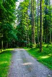 Country road through forest in evening light. Lovely nature scenery with tall trees and green foliage Royalty Free Stock Photography