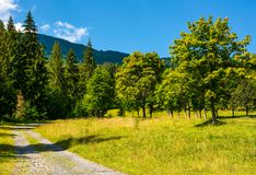 Country road through the forest on a grassy meadow. Beautiful summer landscape of Carpathians Royalty Free Stock Images