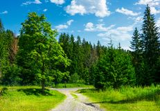 Country road through the forest on a grassy meadow. Beautiful summer landscape of Carpathians Stock Images