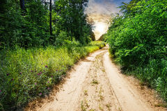 Country road in forest with green grass and trees Royalty Free Stock Images
