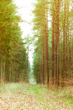Country road in the forest Stock Photography