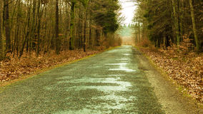 Country road in the forest on misty day Royalty Free Stock Photos
