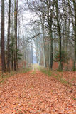 Country road in the forest on misty day Royalty Free Stock Photo