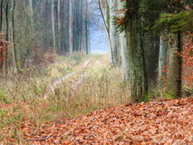 Country road in the forest on misty day. Fall landscape. Country road in the autumn forest. Misty hazy autumnal day Royalty Free Stock Images
