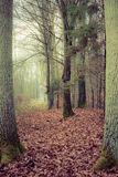 Country road in the forest on misty day. Fall landscape. Country road in the autumn forest. Misty hazy autumnal day Royalty Free Stock Image