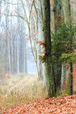 Country road in the forest on misty day. Fall landscape. Country road in the autumn forest. Misty hazy autumnal day Stock Photos