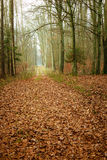 Country road in the forest on misty day. Fall landscape. Country road in the autumn forest. Misty hazy autumnal day Stock Image