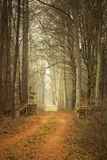 Country road in the forest on misty day. Fall landscape. Country road and pile of wood in the autumn forest. Misty hazy autumnal day Royalty Free Stock Images