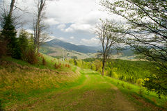Country road in forest, mountain landscape. Carpathian, Ukraine. Royalty Free Stock Image