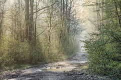 Country road in forest after rain Royalty Free Stock Images