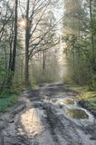 Country road in forest after rain Royalty Free Stock Image