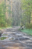 Country road in forest after rain Stock Photography