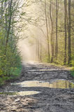 Country road in forest after rain Royalty Free Stock Photos