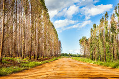 Country road. Through a forest in South Africa Royalty Free Stock Photography