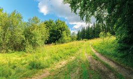 Country road through forest in sun light. Lovely transportation background stock images