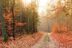 Country road in the forest on sunny day. Fall landscape. Country road with red orange leaves in the autumn forest. Sunny autumnal day in Poland Royalty Free Stock Photo