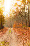 Country road in the forest on sunny day. Fall landscape. Country road with red orange leaves in the autumn forest. Sunny autumnal day in Poland Royalty Free Stock Image