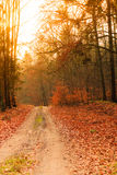 Country road in the forest on sunny day Royalty Free Stock Photography