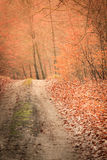 Country road in the forest on sunny day Royalty Free Stock Images