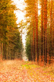 Country road in the forest on sunny day Stock Photos