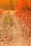 Country road in the forest on sunny day Stock Photography