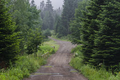 Country road in forest Royalty Free Stock Photos