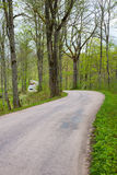 Country road in a forest Stock Photos