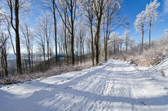 Road in forest during the winter Stock Image