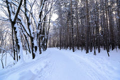 Country road in forest at winter Stock Photo