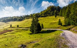 Country road through forested hillside. Beautiful nature scenery in morning Royalty Free Stock Photos