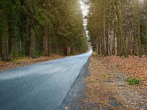 Country road into forrest Royalty Free Stock Photography
