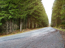 Country road into forrest Royalty Free Stock Photo