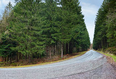 Country road into forrest Royalty Free Stock Photos