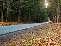 Country road into forrest Royalty Free Stock Image
