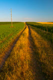 Country road going through agricultural fields Royalty Free Stock Image