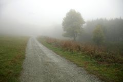 Country road going in to the fog. Maple tree in the fog Stock Photography