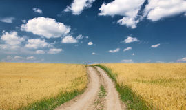 Country road in gold wheat field Stock Image