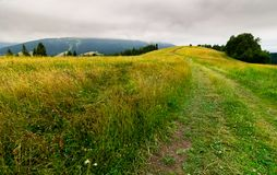 Country road through grassy fields in mountains. Lovely summer countryside on overcast day Royalty Free Stock Image