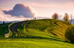 Country road through grassy hill at sunset. Lovely landscape in mountains under the ravishing evening sky with some fluffy clouds Royalty Free Stock Image